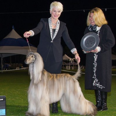 Akc Dog Show 2020.Kennel Club Of Palm Springs Show Discover Palm Desert